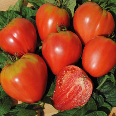 tomaten praktische tipps hausgarten sativa rheinau. Black Bedroom Furniture Sets. Home Design Ideas